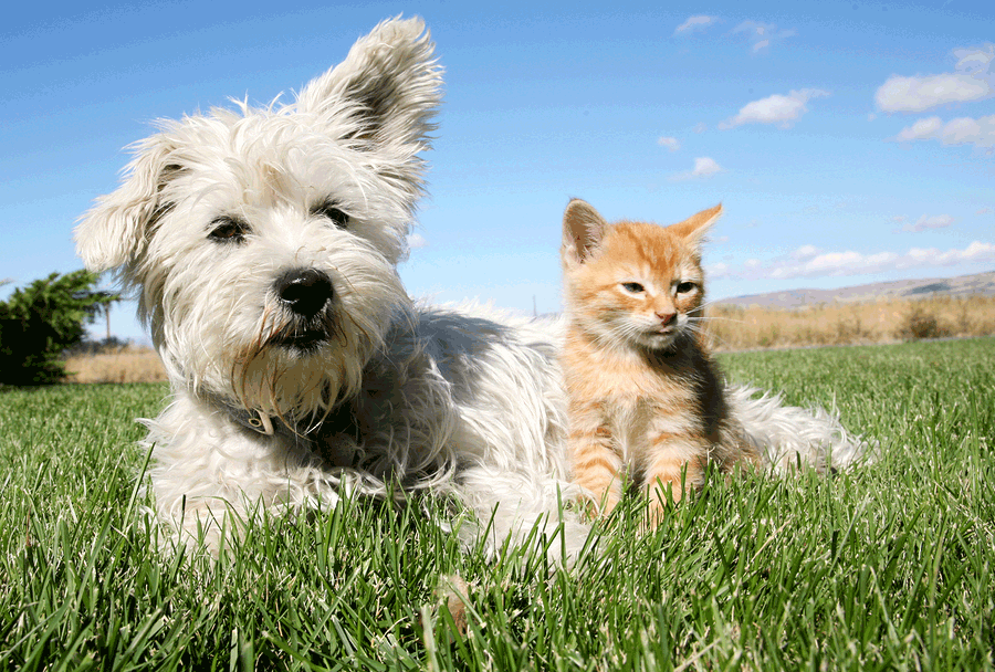 Pet Sitting services from Walk and Wag