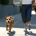 Trotting Dog And Jogger